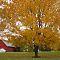 Fall in Cincinnati